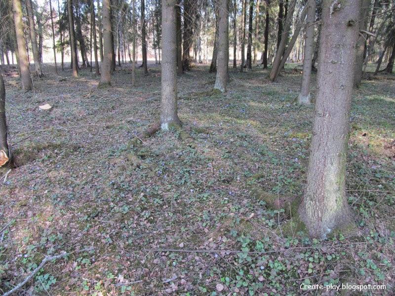 голубые лесные цветы