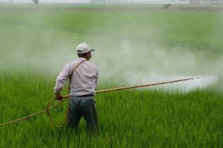 pixabay.com/en/herbicide-avignon-in-rice-field-