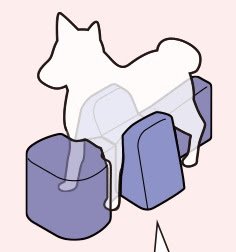 postura veterinária