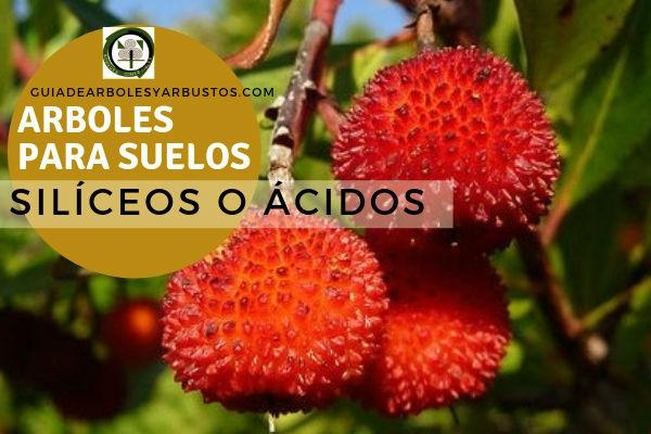 Lista de arboles para Suelos ácidos o silicios. Te proponemos algunas especies de estas plantas conocidas como ácidas o alcalinas.