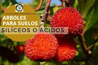 Arboles y arbustos para suelos silíceos para el bosque de alimentos