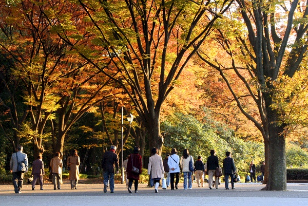 Tokyo destinasi impian ku