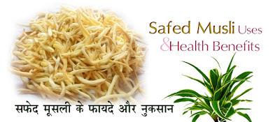 सफेद मूसली एक खास जड़ी बूटी Safed Musli Benefits in Hindi