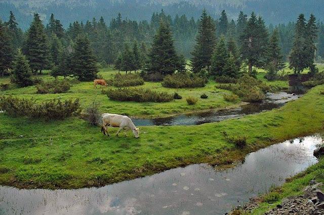 Γνωρίζεις ότι: Το μεγαλύτερο ελατοδάσος της Ελλάδας βρίσκεται στην Δράμα και είναι 700.000 στρέμματα;