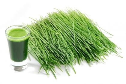 วีทกราส (Wheatgrass) ต้นอ่อนข้าวสาลี @ www.orionhealing.com