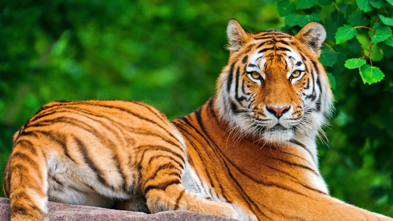 21 Full Hd Animal Wallpaper Pictures Image And Animal Photos Top