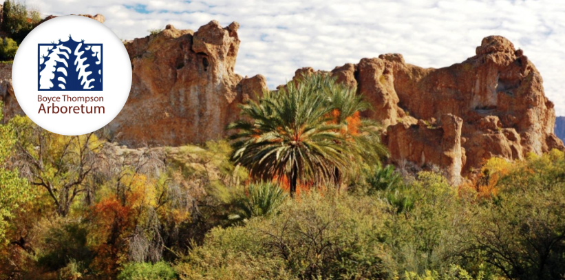 bryce thompson arboretum bogo coupon for may 12 2017 with printed copy of coupon bring a picnic lunch and enjoy the day strolling through our stunning - Desert Botanical Garden Coupon