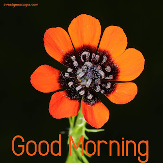 Good Morning Message  - Romantic Good Morning Wishes