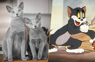 """Tom & Jerry"" Movie"