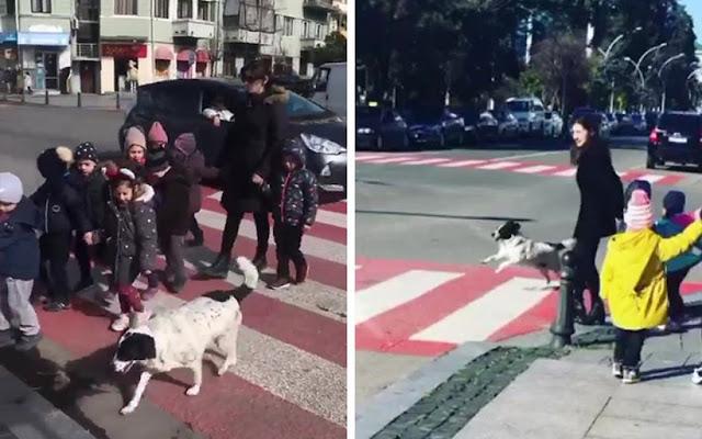 Бездомная собака помогает детям перейти через дорогу.!