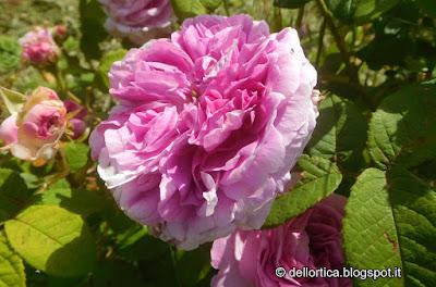 escursioni, passeggiate, birdwatching, rose erbe officinali erbe spontanee, dittamo o frassinella e magari un capriolo