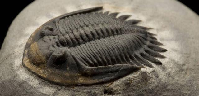 Trilobites y biologia
