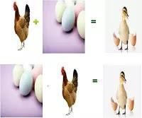 Tavuk mu Yumurtadan Çıkar ? Yumurta mı Tavuktan ?