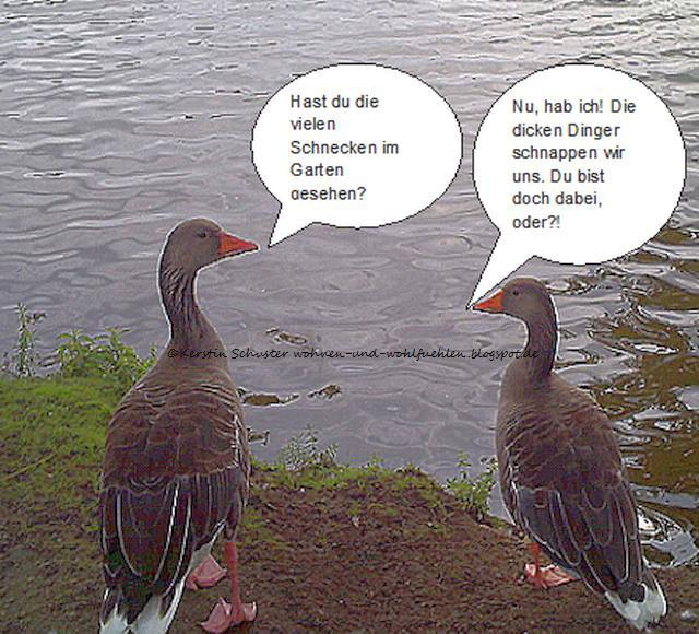 Enten Schnecken Fressen Garten: Gefräßige Schnecken Im Garten: Was Hilft Wirksam Gegen Die