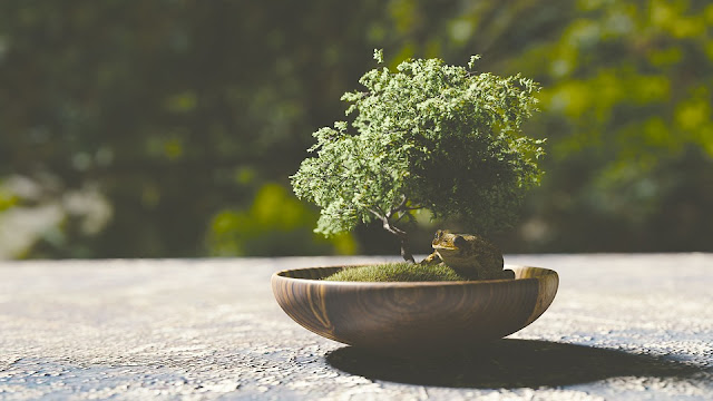 coltivare-bonsai