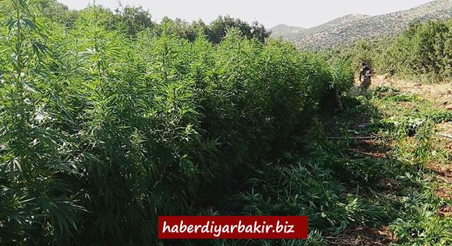 Diyarbakır'da 527 bin 150 kilo esrar ele geçirildi