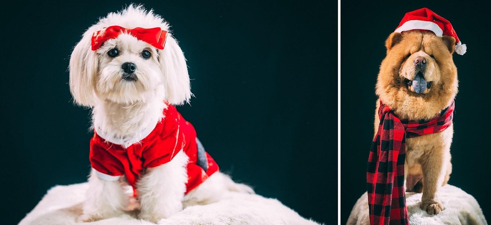 Gmail christmas theme - Theme Christmas Photo And Post Cardinal Scene Studio