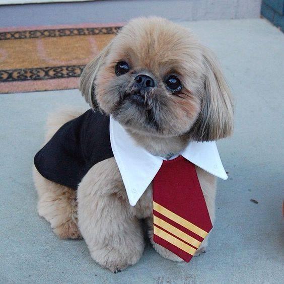 Best Dog Na Es