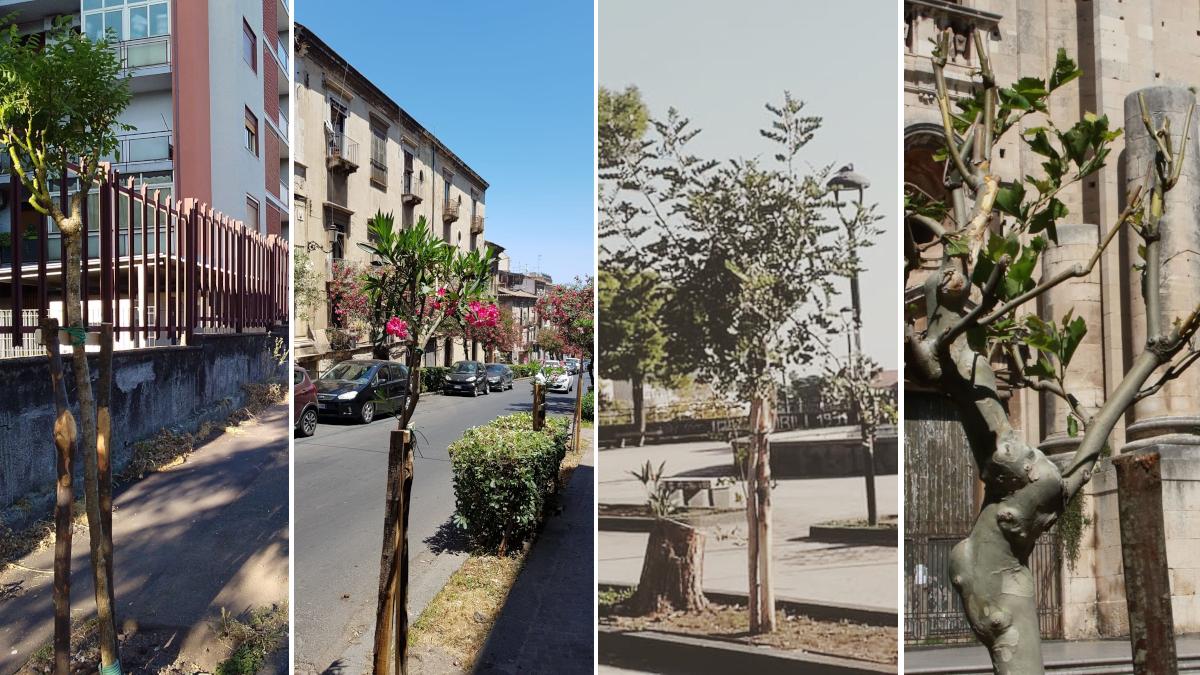 Progetto 2000 alberi per Catania