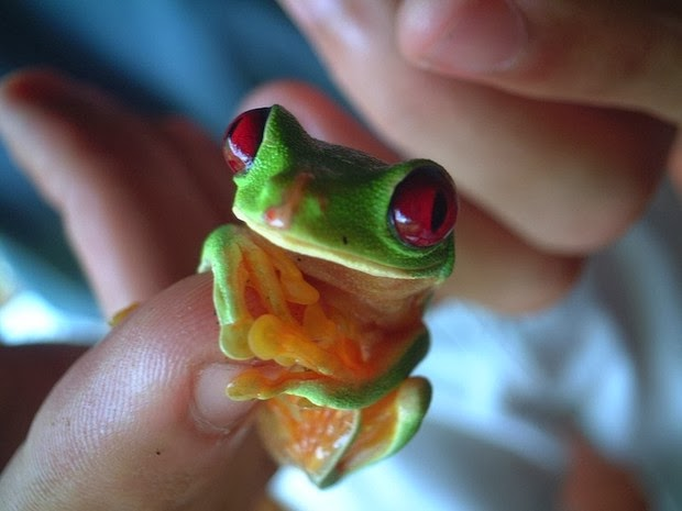 Adorable Photos of Tiny Animals