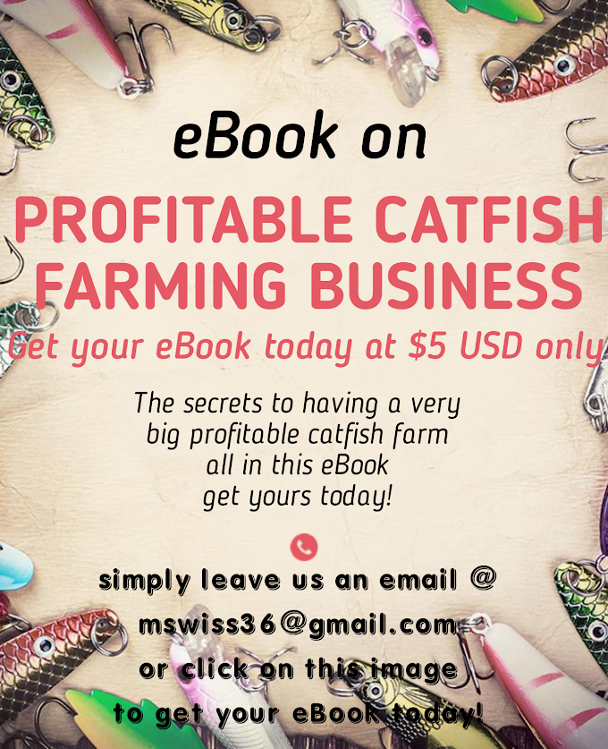 Secrets to starting a Profitable Catfish Farming business in 2020
