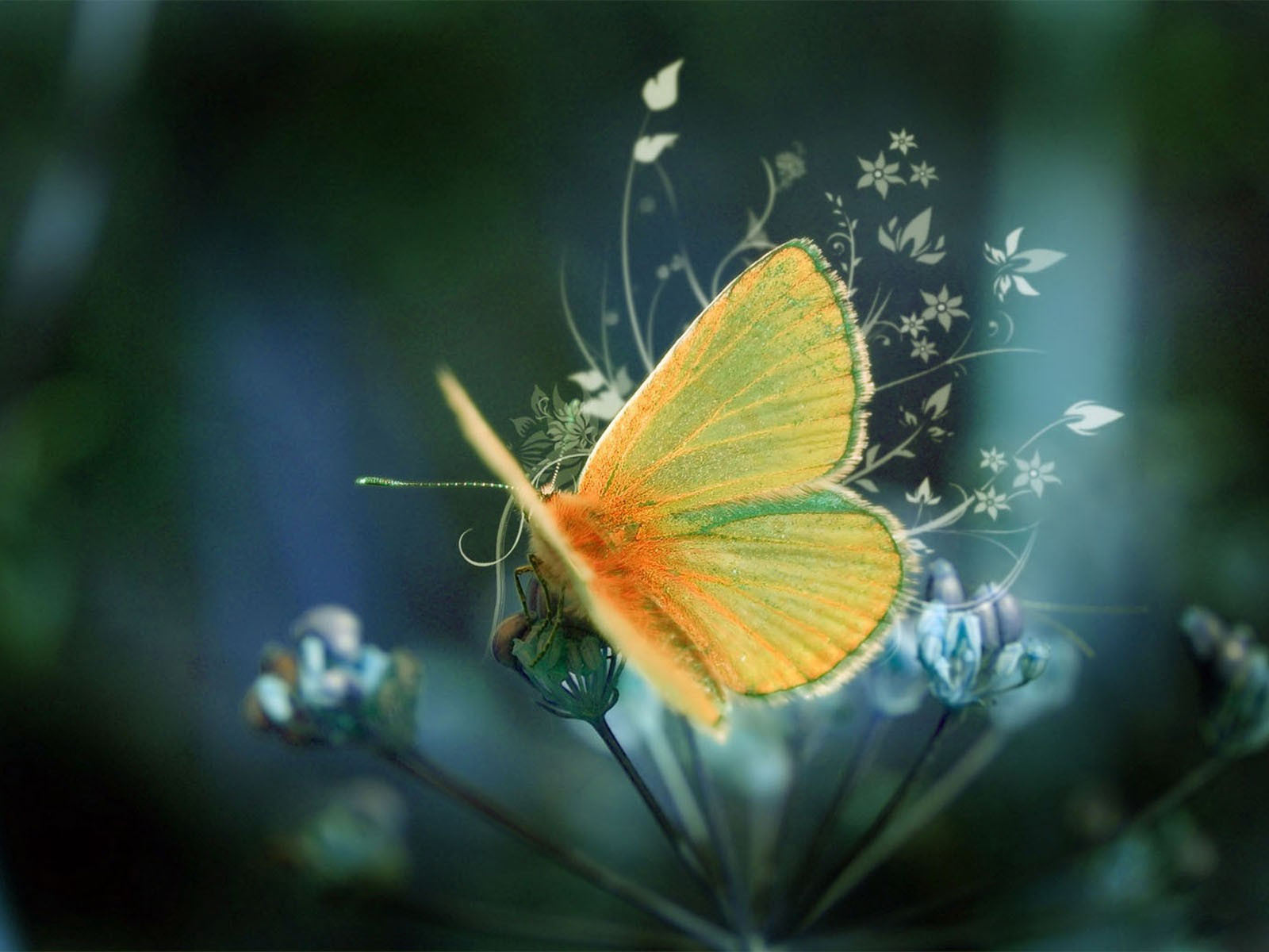yellow butterfly wallpaper free - photo #22