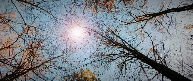 ảnh rừng cây và bầu trời mùa thu