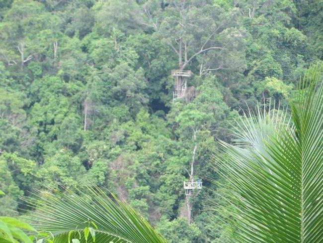площадки построенные на деревьях