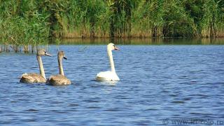 ici-colo.ro: Delta Dunarii pentru cei comozi - Colina, Canalul Lipovenilor, lacul Solomon, Golful Holbina