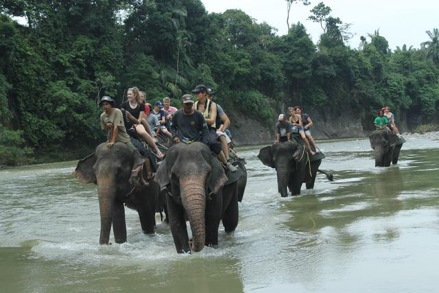 Taman Nasional Way Kambas, Tempat Wisata di Lampung Timur Yang Paling Meimikat Turis asing-gajah sumatera