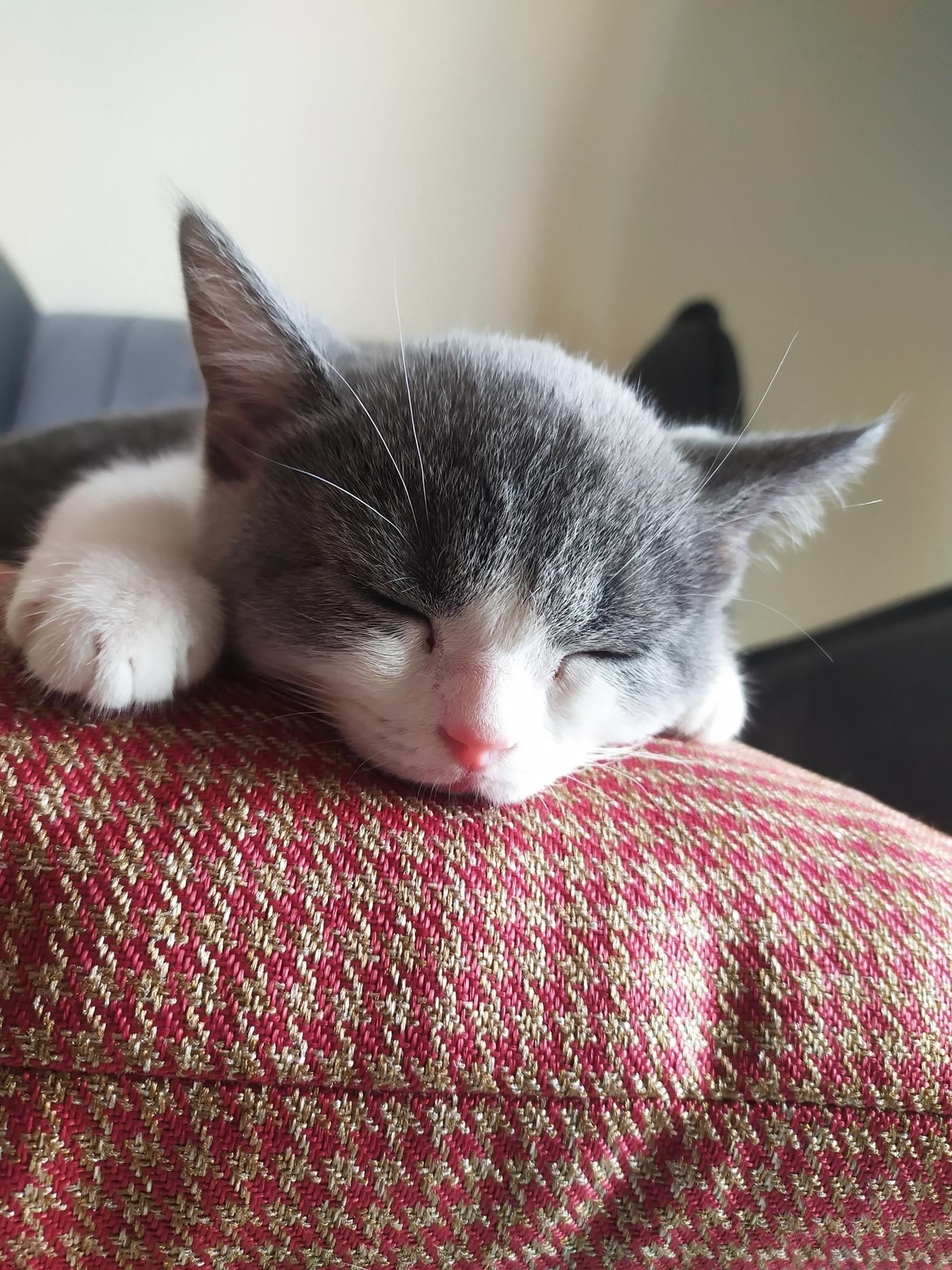 Cute Sleeping Kitten