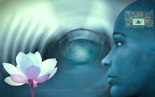 Identification d'une fleur dans notre conscience