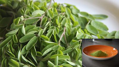 moringa, plante, plante moringa, extraits moringa