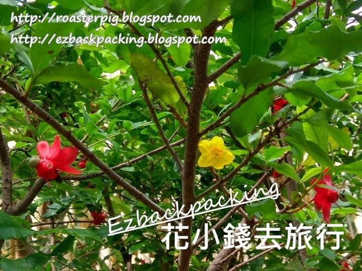 香港桂葉黃梅