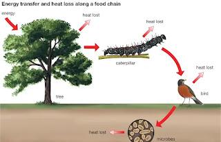 खाद्य श्रृंखला food chain