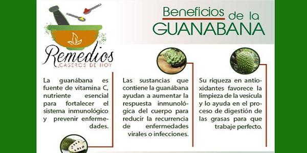 Así se preparar el té de hojas de guanábana para matar las células del CÁNCER, controlar el asma y la diabetes, calmar los nervios e inducir al sueño y mucho más