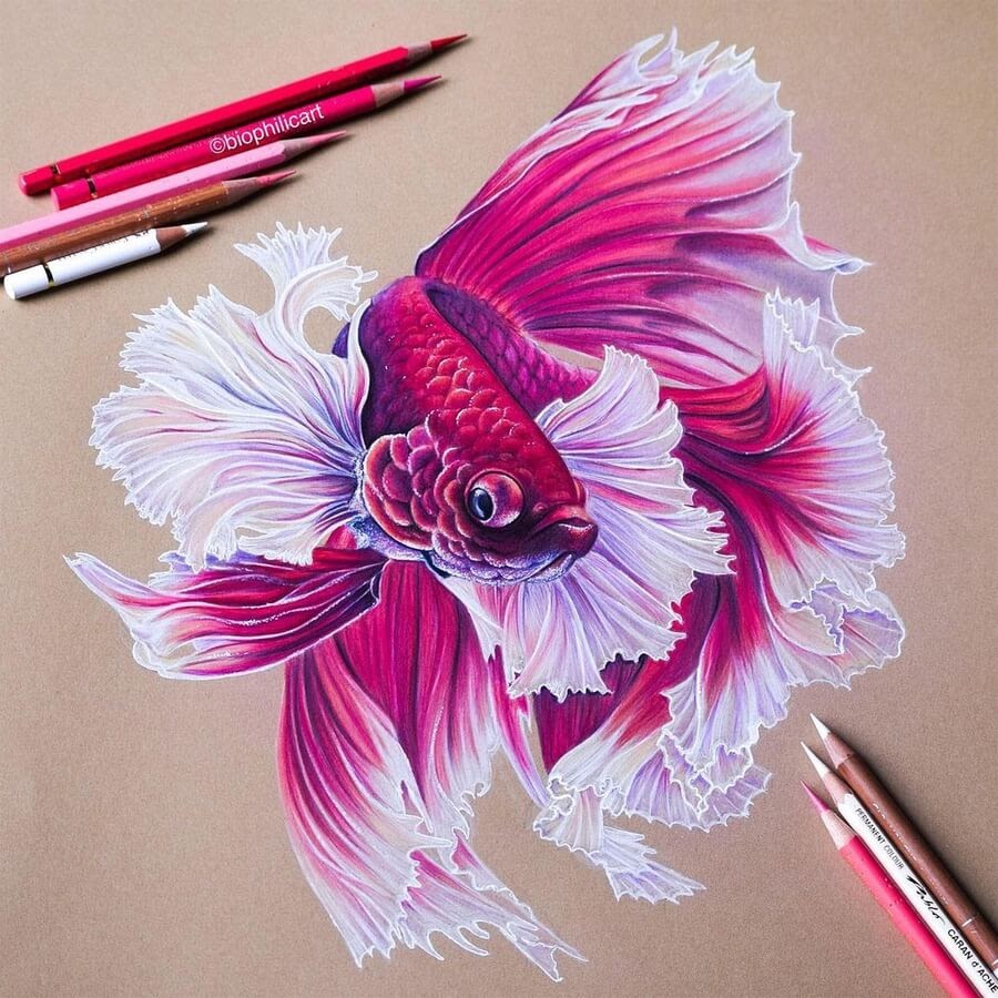 05-Pink-beta-fighting-fish-Sallyann-www-designstack-co