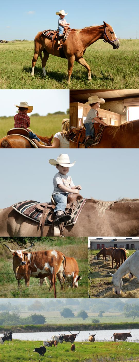 cattle ranch photos