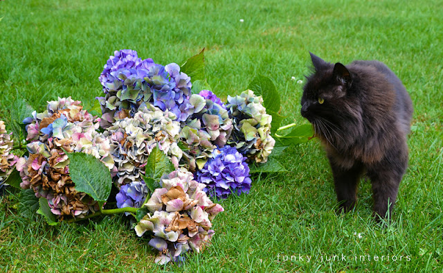 How to harvest and dry amazing MULTICOLOURED HYDRANGEAS - Funky Junk Interiors