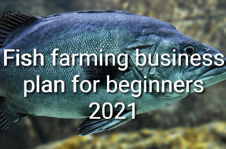 Fish farming business plan