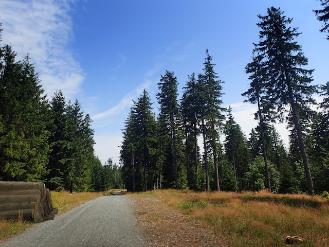 Las w Górach Bystrzyckich