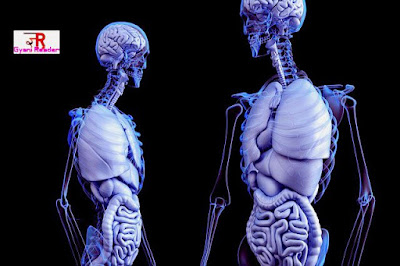 Amazing facts about human body  interesting facts about human brain  interesting facts about human behavior  funny biology facts  amazing facts about human body in hindi  amazing facts about human body with pictures  strange but true facts about humans, 10 incredible human body facts,  human body facts quiz