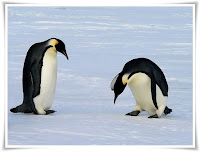 Emperor Penguin Animal Pictures