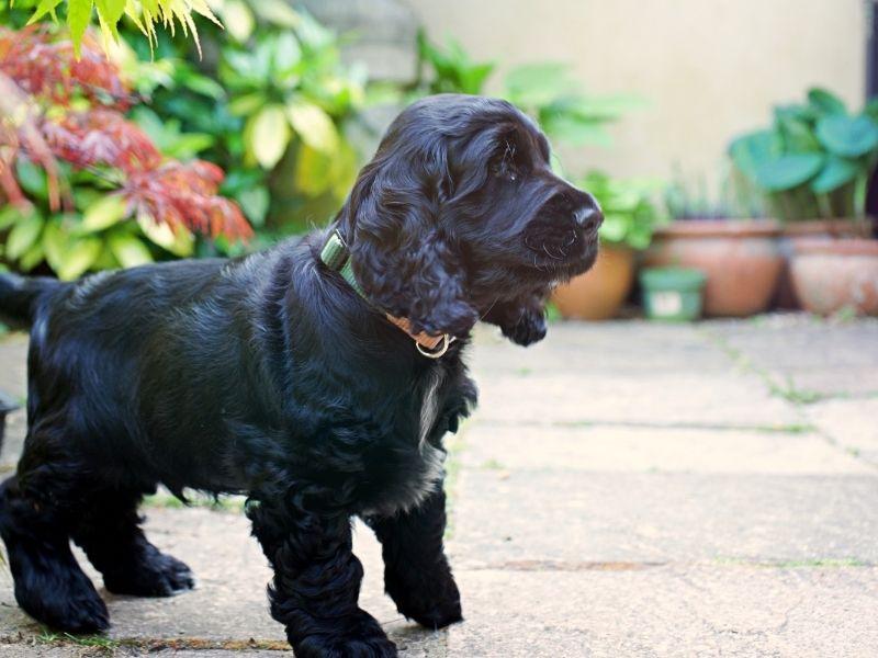 Puppy development from 3 to 6 months