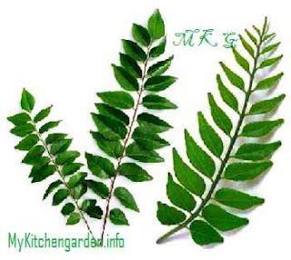 how do i secure my curry leave plant leaf from insects ask