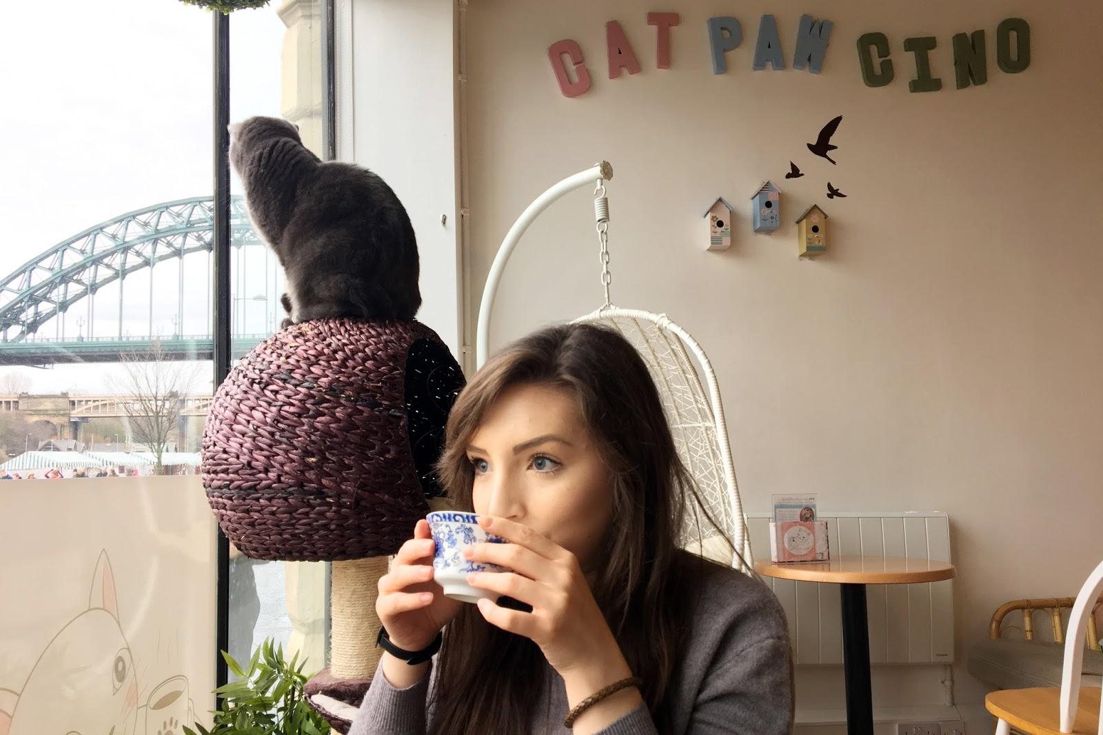 Helo Freckles Catpawcino Cat Cafe Newcastle Quayside nebloggers