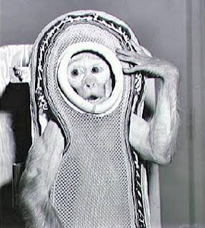 albert monyet yang terkenal di dunia yang di kirim ke luar angkasa
