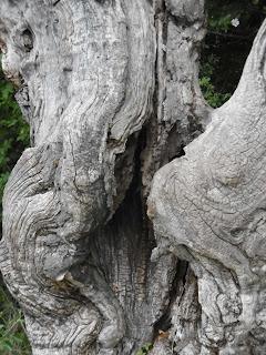 Esprit des bois et Fée, Cousson, malooka