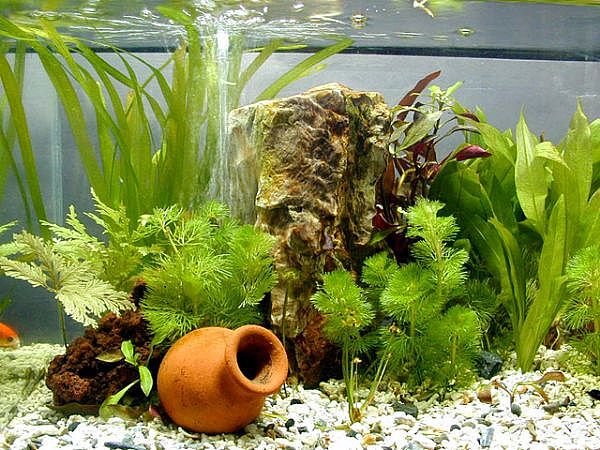 Everything you need is here: Maintenance Fish Tank