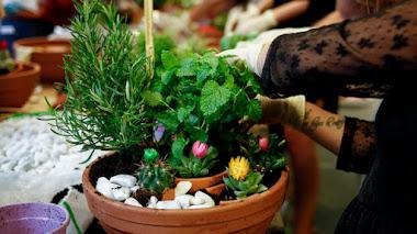 DIY Cómo hacer un mini jardín en una maceta